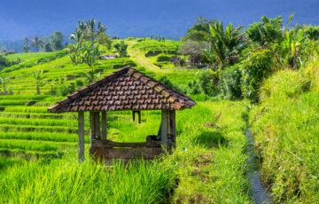 villas to rent ubud
