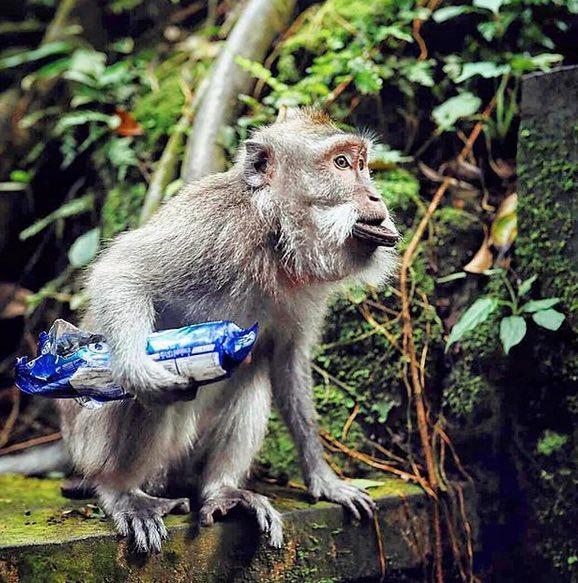 cheeky monkey at uluwatu temple
