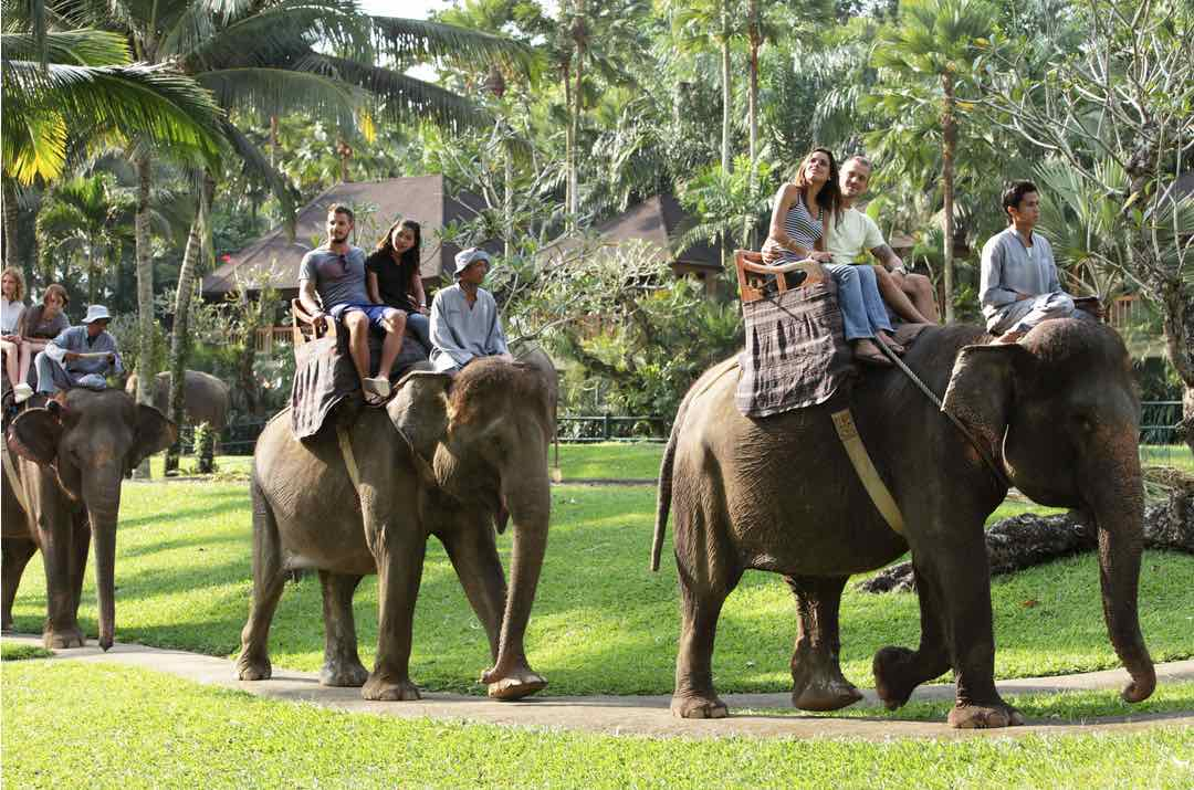 elephant jungle ride in bali - bali tours