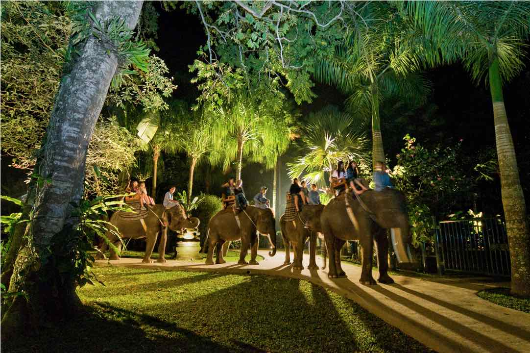 elephant night ride bali tours