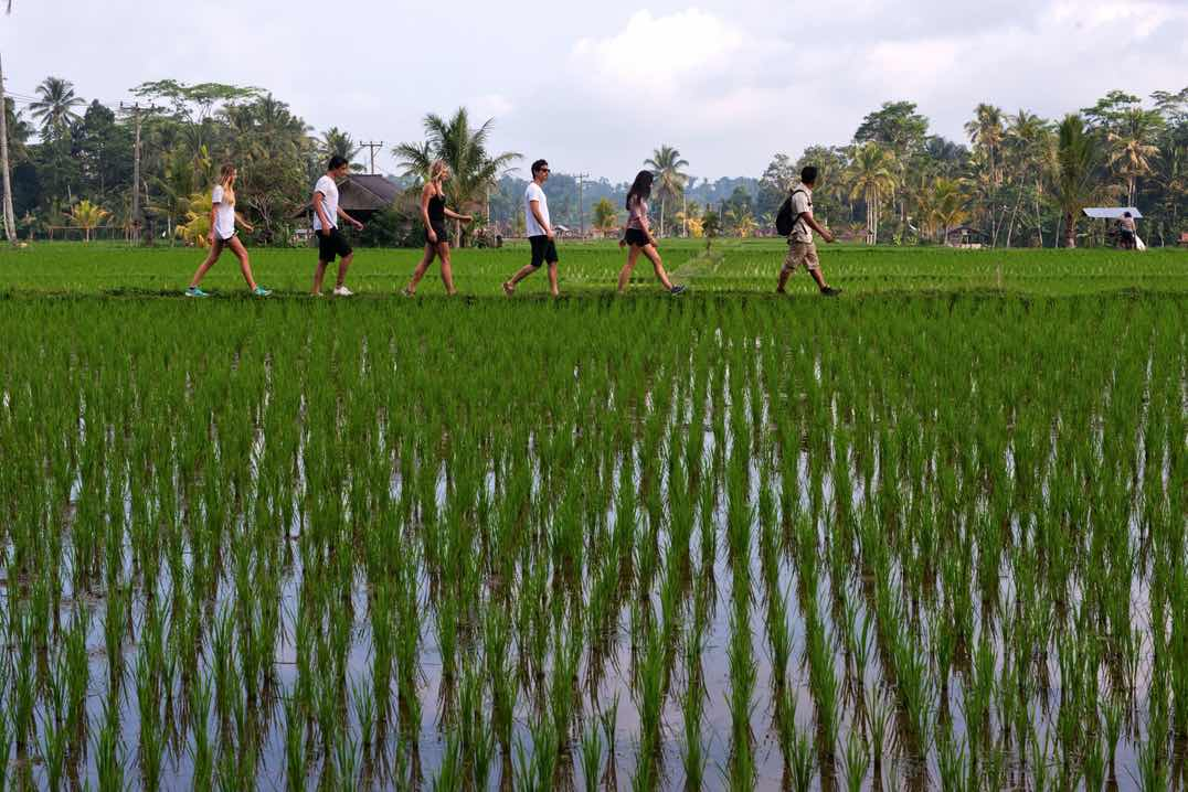 tropical trekking bali tours