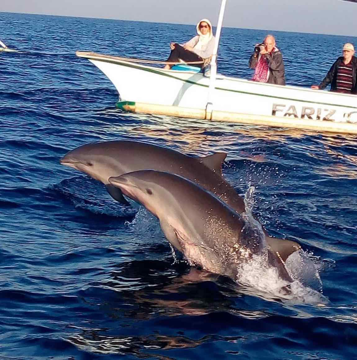 dolphin watching tour lovina best tours bali